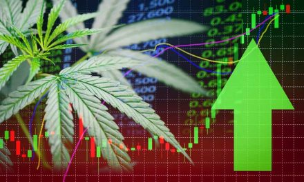 5 Reasons You Should Invest in Marijuana Stocks
