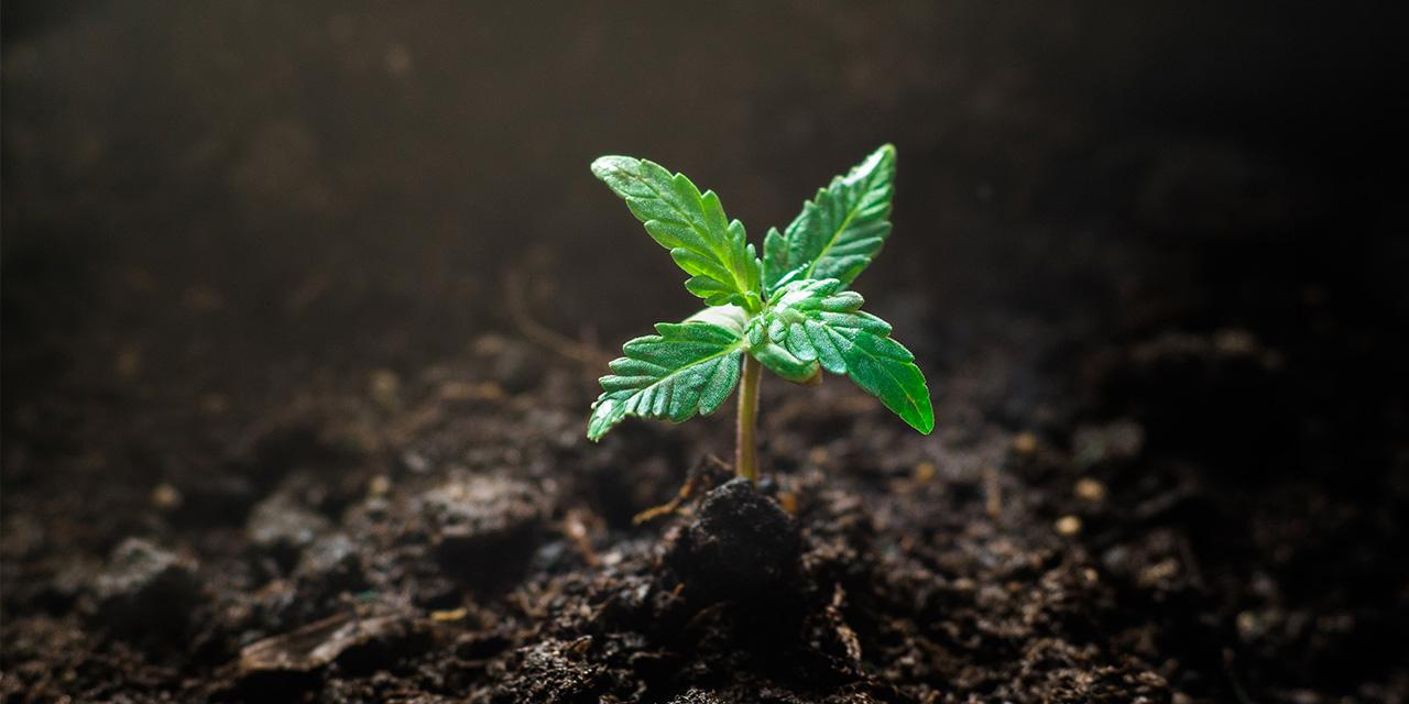 Hemp, Inc. Applauds Addition of Hemp Legislation to 2018 Farm Bill