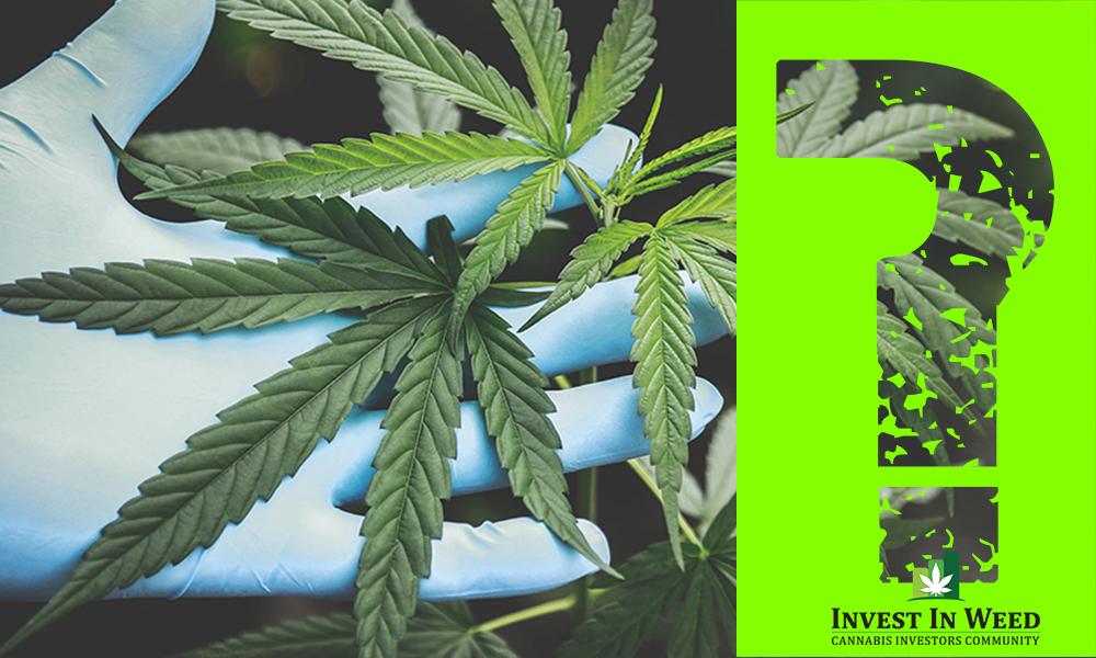 Growing Pains: The Biggest Challenges in Marijuana 2019