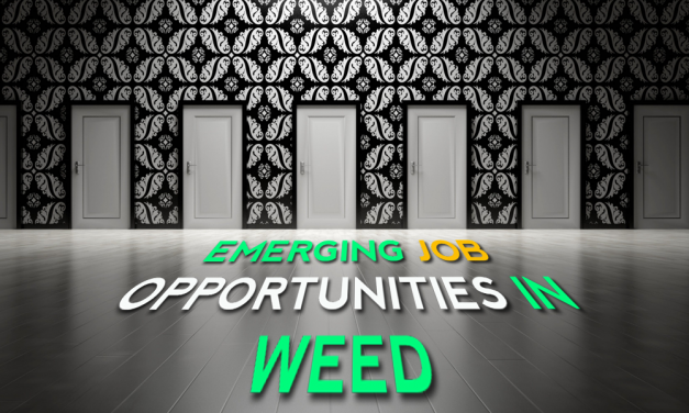 Seven Emerging Job Opportunities in Weed