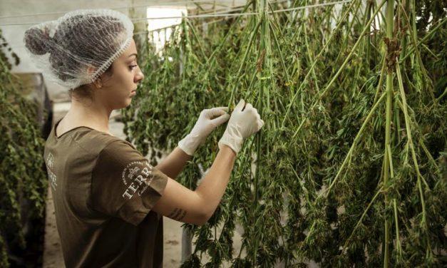 The Best Performing Companies in the Marijuana Stocks Industry