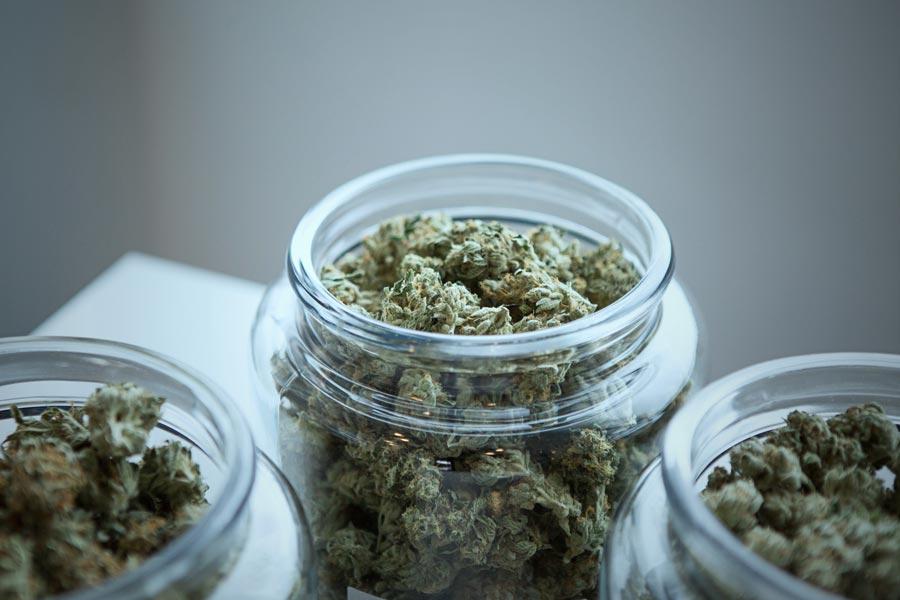 Top 10 Website to Bookmark for Latest Marijuana News