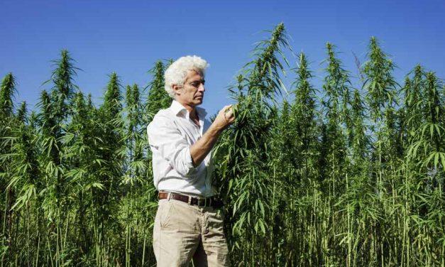 Undeniable Reasons People Hate Marijuana Stocks